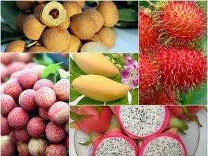 Xuất khẩu nông sản Việt Nam sang Trung Quốc đang gặp nhiều trở ngại
