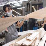 Tạm ngừng kinh doanh, tạm nhập tái xuất gỗ dán sang Hoa Kỳ