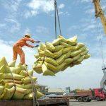 Thủ tướng: Xuất khẩu gạo bình thường từ 1/5, khẩn trương mua đủ gạo dự trữ quốc gia