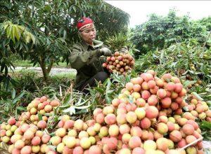 Xuất khẩu nông sản bền vững sang Trung Quốc: Cần cách thức tiếp cận mới